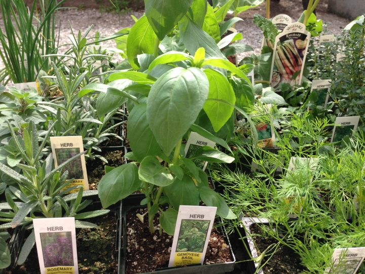 Order-Ahead Starter Plants
