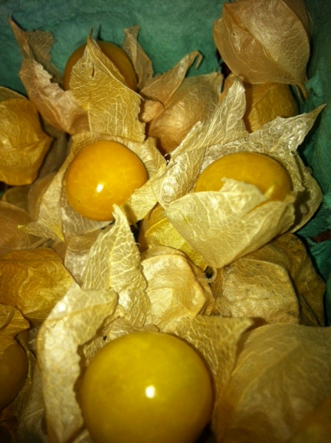 Ground Cherries Are Here
