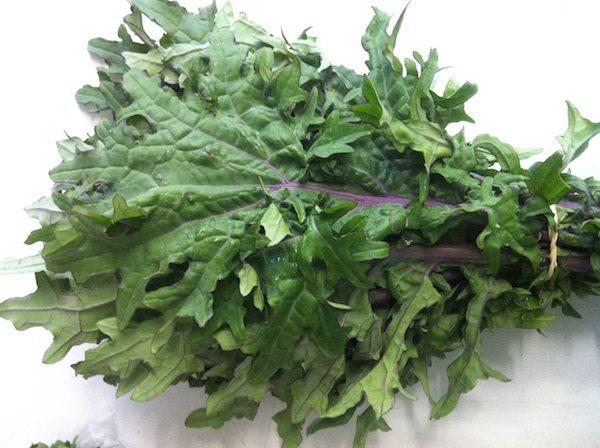 kale.redrussian