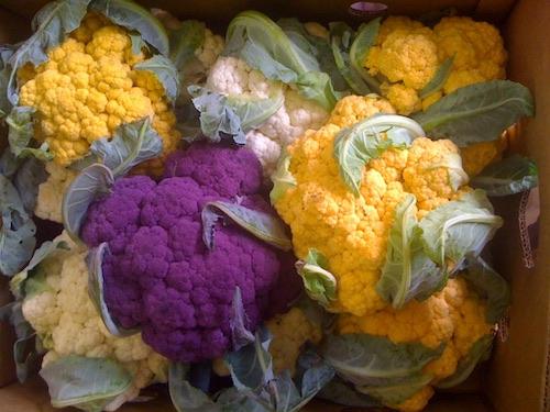 Cauliflower_Tricolor