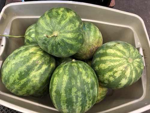 watermelons.tub